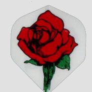 England Rose Valkoinen