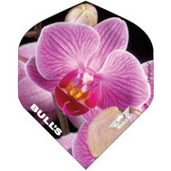 Bulls Powerflite Pink Orchid